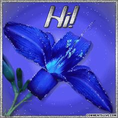 Flowers Greetings Graphics and GIF Animation for Faceboook Hello Pictures, Dream Pictures, Text Pictures, Hi Images, Hello Quotes, 38th Birthday, Belated Birthday, Diwali Greetings, Christmas Greetings