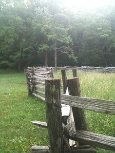 misty field trees and split rail fence Evergreen Hedge, Split Rail Fence, Country Fences, Building A Fence, Old Fences, White Picket Fence, Fence Gate, Hobby Farms, Hedges