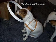 how to make a dog harness   ... materials that can be used for the blind dog hoop and the harness
