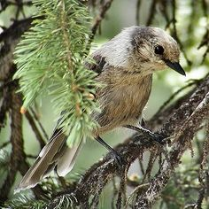 Coniferous Forest Animals and Plants   Utah Division of Wildlife Resources