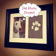 Pupsicle DIY Project