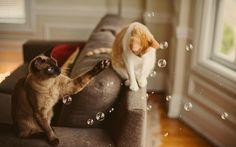 Des bulles, des bubulles!