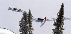 Der kanadische Trapper fährt seine Fallen per Hundeschlitten ab. Im Winter bei hohem Schnee ist das Kufengefährt mit den robusten Zugtieren das beste Transportmittel in der Wildnis. Das Gespann besteht aus Rüden und einer führenden Hündin – Diese Karte hier online kaufen: http://bkurl.de/pkshop-211228 Art.-Nr.: 211228 Mit Hundestärken | Foto: © William DeKay | Text: Rolf Bökemeier
