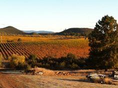 Montesquieu Winery, CA