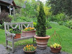 lily bulbs from seed, trees in pots, garden journal ideas & more: q&a with ken druse - A Way To Garden Potted Trees, Trees And Shrubs, Small Gardens, Outdoor Gardens, Green Tower, Thuja Occidentalis, Columnar Trees, Lily Bulbs, Overwintering