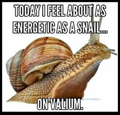 Today I feel about as energetic as a snail on valium Haha Funny, Lol, Funny Stuff, Funny Shit, Funny Things, Freaking Hilarious, Work Quotes, Daily Quotes, Twisted Humor