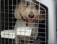 In time for holiday travel: Tips for travelling with your pet. Go to article to read more. A good travel crate can help keep your pet from being injured