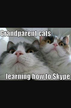 Grandparent cats attempting life