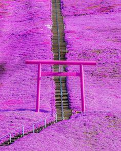 Post with 147385 views. Higashimokoto Shibazakura Park in Hokkaido, Japan Amazing Photography, Nature Photography, Travel Photography, Canon Photography, Beautiful World, Beautiful Places, Places To Travel, Places To Go, Monte Fuji