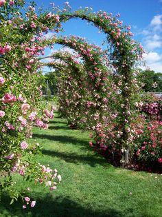 Elizabeth Park Rose Garden, Elizabeth Park, 1555 Asylum Ave, West Hartford, Connecticut. I don't want to get married here but I love multiple romantic arches!!!