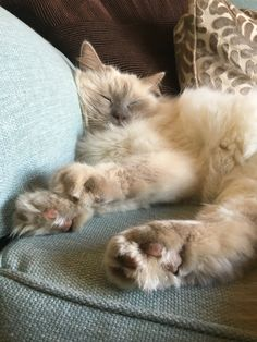Cici & Cooper our adorable Ragdoll Kittens Cats are my