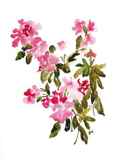 Pink Cascade 2, Fine Art Print from Watercolor Painting, Watercolor Flowers