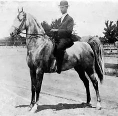 Princess Eugenia (BHF) was the dam of American Saddlebred stallion CH King's Genius