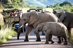 Pilanesberg Game Reserve Private Day Tour from Johannesburg in South Africa Africa Tourism In South Africa, Visit South Africa, Camping Tours, Game Lodge, Game Reserve, African Safari, Grand Tour, Travel Deals, Day Tours