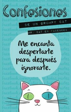 Ignorarte Mr Cat, Grumpy Cat, I Love Cats, Cute Cats, Funny Cats, Crazy Cat Lady, Crazy Cats, Soft Kitty Warm Kitty, Raining Cats And Dogs
