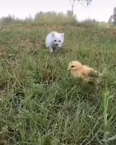 Cute Baby Cats, Cute Little Animals, Cute Funny Animals, Kittens Cutest, Cats And Kittens, Funny Cats, Kitty Cats, Cute Kitty, Kittens Meowing