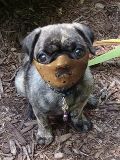 A pug in a hannibal Lecter mask? Amor Pug, Hannibal Lecter, Hannibal Mask, Hannibal Humor, Dog Pictures, Animal Pictures, Funny Pictures, Funny Animals, Cute Animals