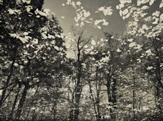 Even in black and white, this picture perfectly captures the movement and feeling of autumn. From R Tomasino, London.