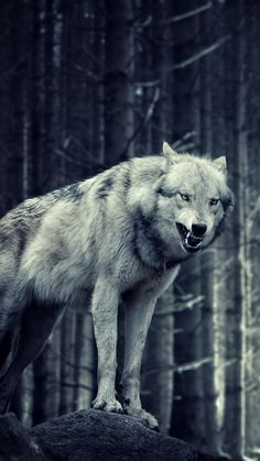Download wolf Wallpaper by d0 Free on ZEDGE