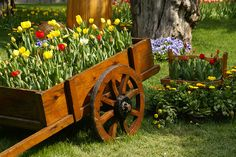 Flowers Growing out of Cart