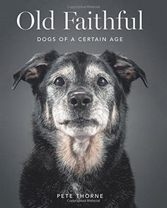 Old Faithful: Dogs of a Certain Age by Pete Thorne http://www.amazon.com/dp/0062413457/ref=cm_sw_r_pi_dp_ycxIwb1QBH9NM
