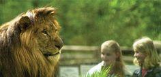 Ausflugsidee für die ganze Familie: Zoo Eberswalde in #Brandenburg