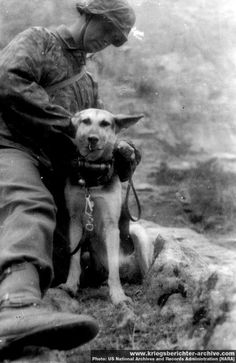 """SS-Division """"Prinz Eugen"""". 1942, Serbia (Yugoslavia). Messenger dog having the message canister attached around his neck."""