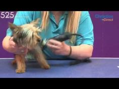 #Grooming Guide - #Yorkshire #Terrier #Puppy Trim - ProGroomer #dogs