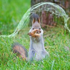 Cet écureuil maitrise l'eau