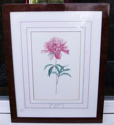 Paeonia British Museum Natural History Framed Print Certified Limited Edition
