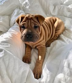 Dog And Puppies Small .Dog And Puppies Small Cute Little Animals, Cute Funny Animals, Funny Dogs, Cute Dogs And Puppies, I Love Dogs, Doggies, Puppies Tips, Cute Creatures, Animals Beautiful