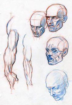 ANATOMY FOR COMICS by AbdonJRomero on deviantART