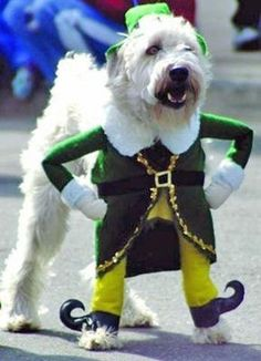 A dog wearing a St Patricks Day Costume.