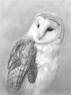 barn owl portrait By Nolon Stacey @ The Smithy Gallery Kettlewell