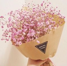 pink flowers Gypsophila Elegans, Babies Breath, Pink Flowers, Planting Flowers, Floral Arrangements, Beautiful Flowers, Bouquet, Perfume, Garden