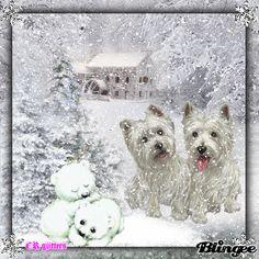 Winter Westies!!