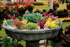 Succulents for the South Florida landscape