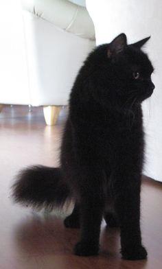 Magnificent cat!