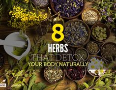 8 Herbs That Detox Your Body Naturally. DANDELION, RED CLOVER, CILANTRO, MILK THISTLE, BURDOCK ROOT, STINGING NETTLE