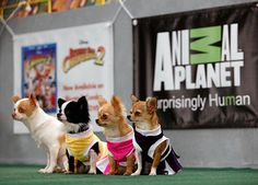 The pups from 'Beverly Hills Chihuahua 2' visit the Puppy Bowl stadium!