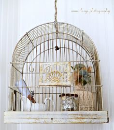 Smalls inside a birdcage display