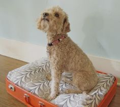 Stuff a pillow in half of an old suitcase and abracadabra! You have a cute pet bed!