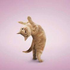 i is ballerina!