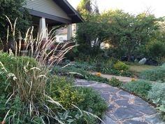 This used to be a lawn, now it's our front yard butterfly garden.