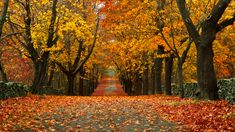 Fall Foliage Prediction Map - When Leaves Will Change Color Across America