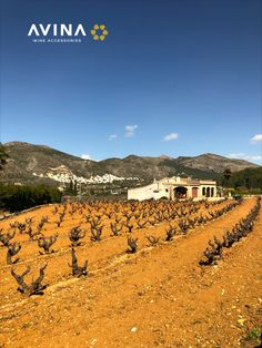 It's typical here to see vineyards right next to a house. All the locals seems to grow their own and be a part of one cooperative or another. Wine Vineyards, Wine Bottle Stoppers, The Locals, House, Outdoor, Outdoors, Wine Bottle Corks, Home, Outdoor Games