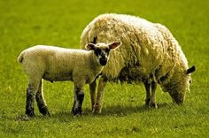 Check out this great insight into the wide world of wool! #wool #sheep