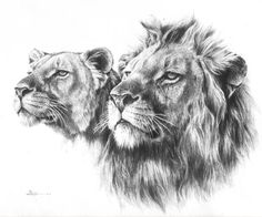 lion sketch - Google Search