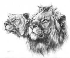 lion sketch - Google Search