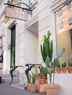 La planta de moda ya tiene concept store | itfashion.com